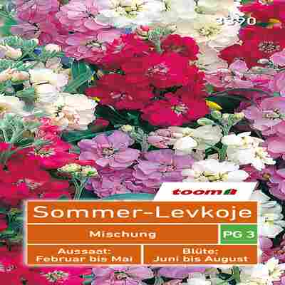 toom Sommer-Levkoje 'Mischung'