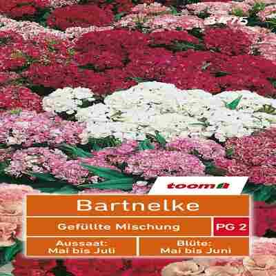 toom Bartnelke 'Gefüllte Mischung'