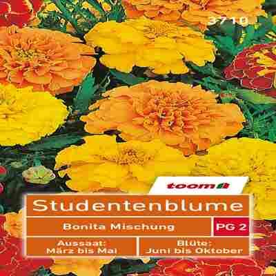 toom Studentenblume 'Bonita Mischung'