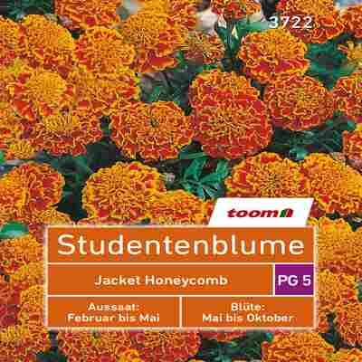 toom Studentenblume 'Jacket Honeycomb' 50 Stück