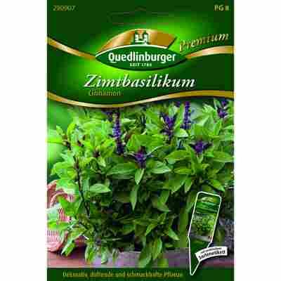 Premium Zimt-Basilikum 'Cinnamon'