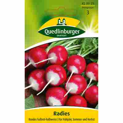 Radies 'Rundes halbrot-halbweiss'