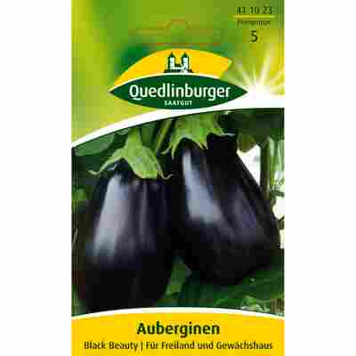 Aubergine 'Black Beauty'