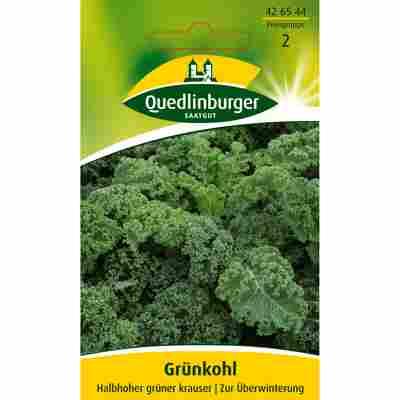 Grünkohl 'Halbhoher grüner krauser'