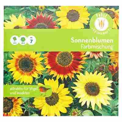 """Sonnenblumen """"Farbmischung"""""""
