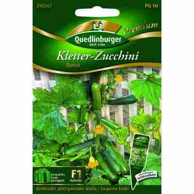 Premium Kletter-Zucchini 'Quine'