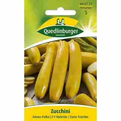 Zucchini 'Atena Polka'