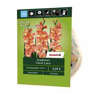 Gladiolen 'Coral Lace' 10 Stück