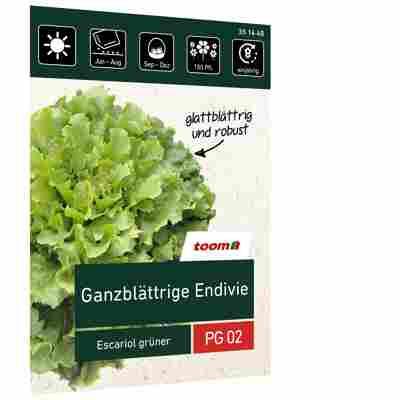 Ganzblättrige Endivie 'Escariol grüner'