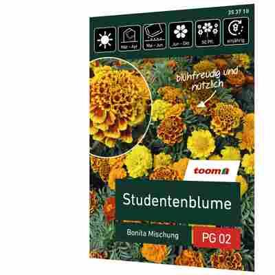 Studentenblume 'Bonita Mischung'