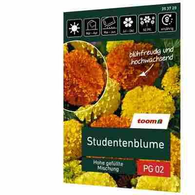 Studentenblume 'Hohe gefüllte Mischung'