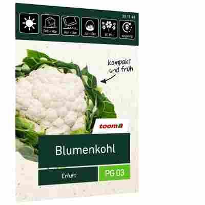 Blumenkohl 'Erfurt'