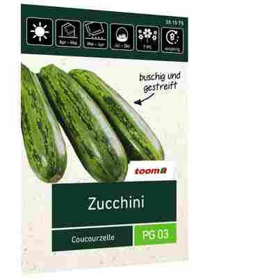 Zucchini 'Coucourzelle'