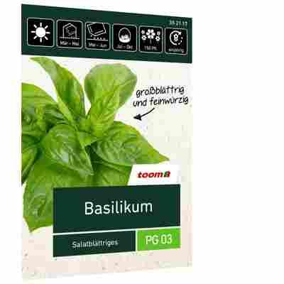 Basilikum 'Salatblättriges'