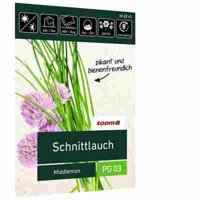 Schnittlauch 'Middleman'