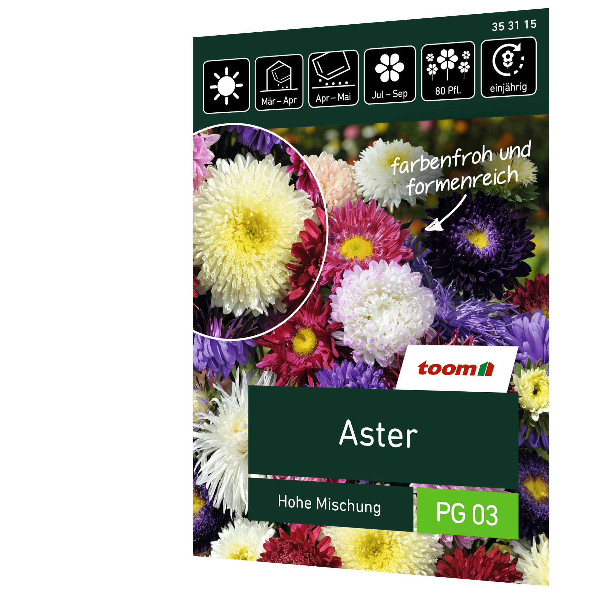 toom Aster 'Hohe Mischung'