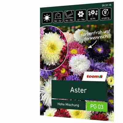 Aster 'Hohe Mischung'