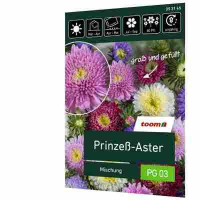 Prinzess-Aster 'Mischung'