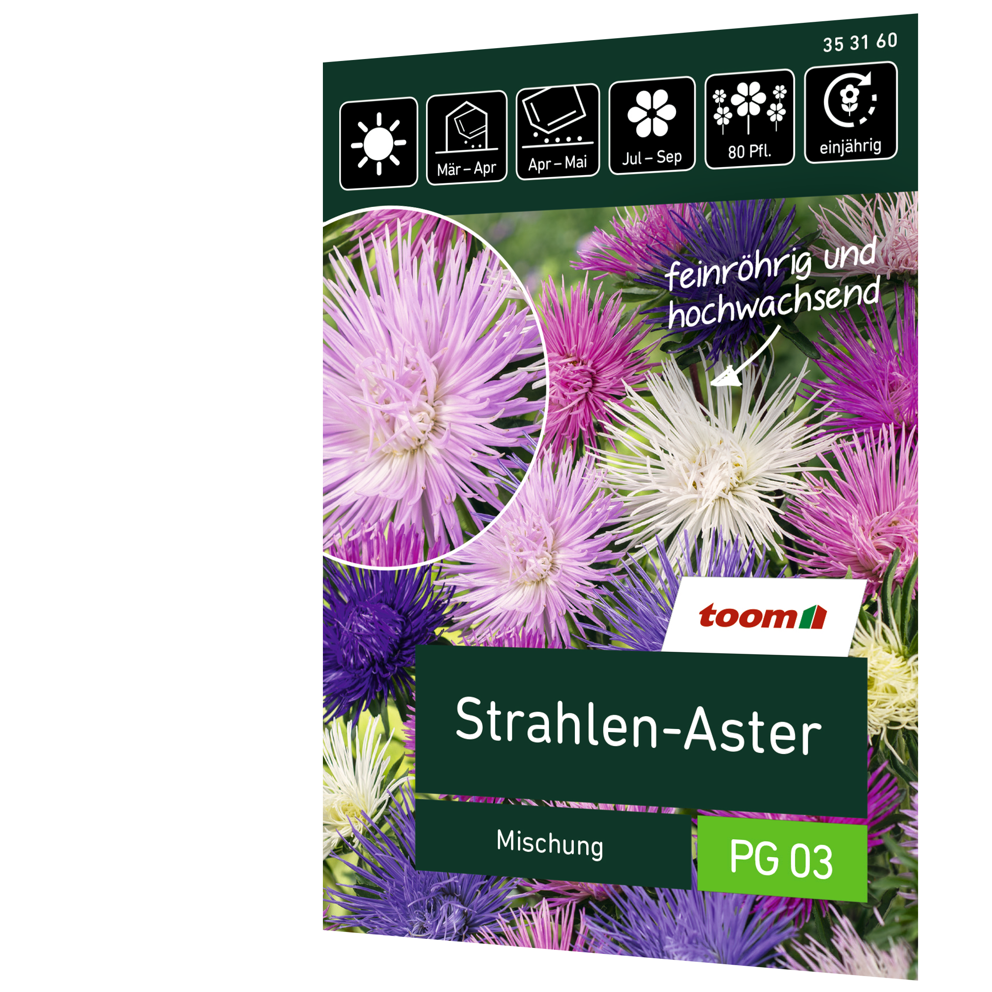 toom Strahlen-Aster 'Mischung'