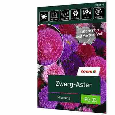 Zwerg-Aster 'Mischung'