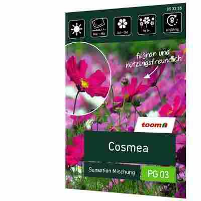Cosmea 'Sensation Mischung'