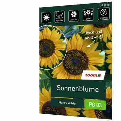 Sonnenblume 'Henry Wilde'