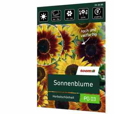 Sonnenblume 'Herbstschönheit'
