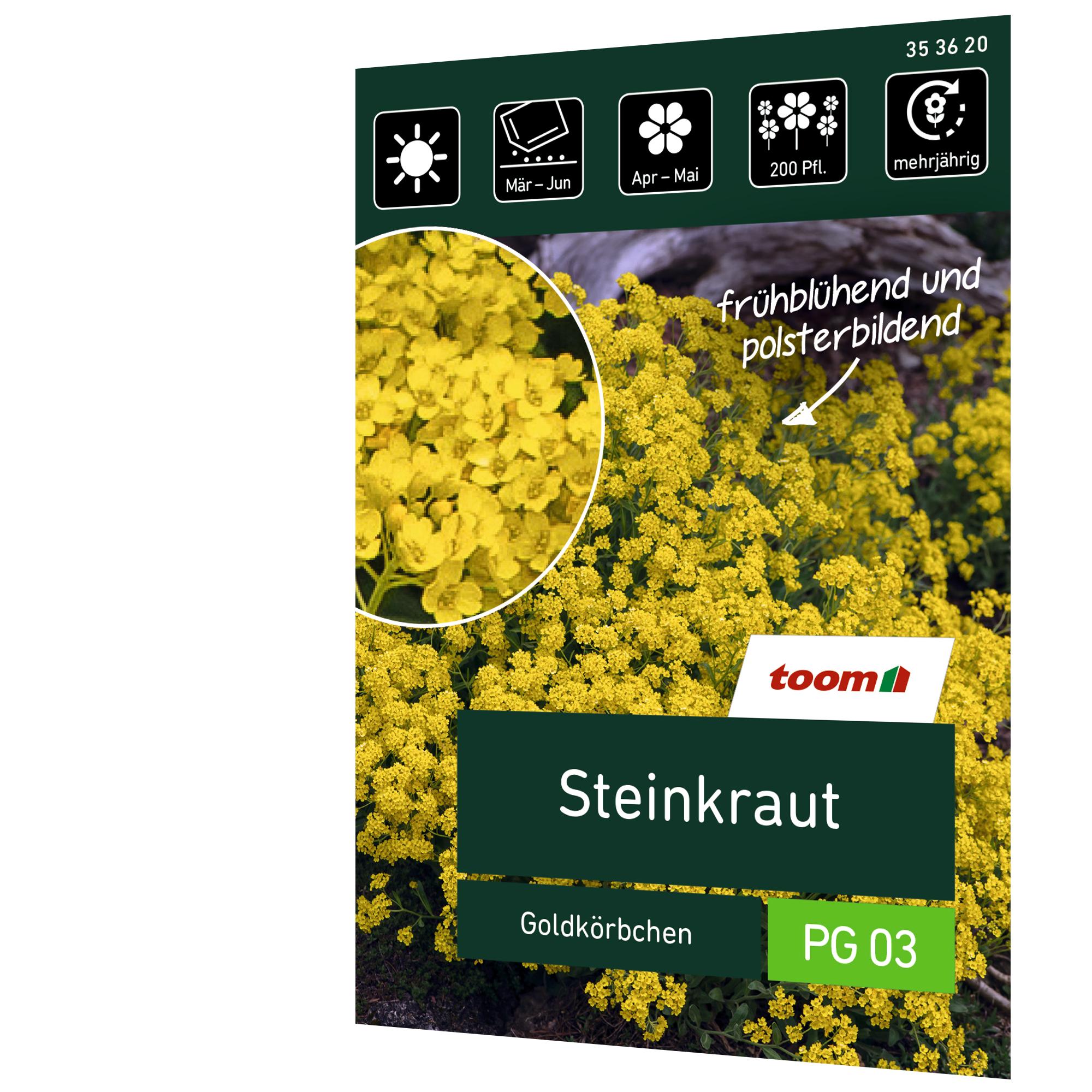 toom Steinkraut 'Goldkörbchen'