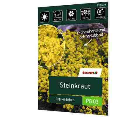 Steinkraut 'Goldkörbchen'