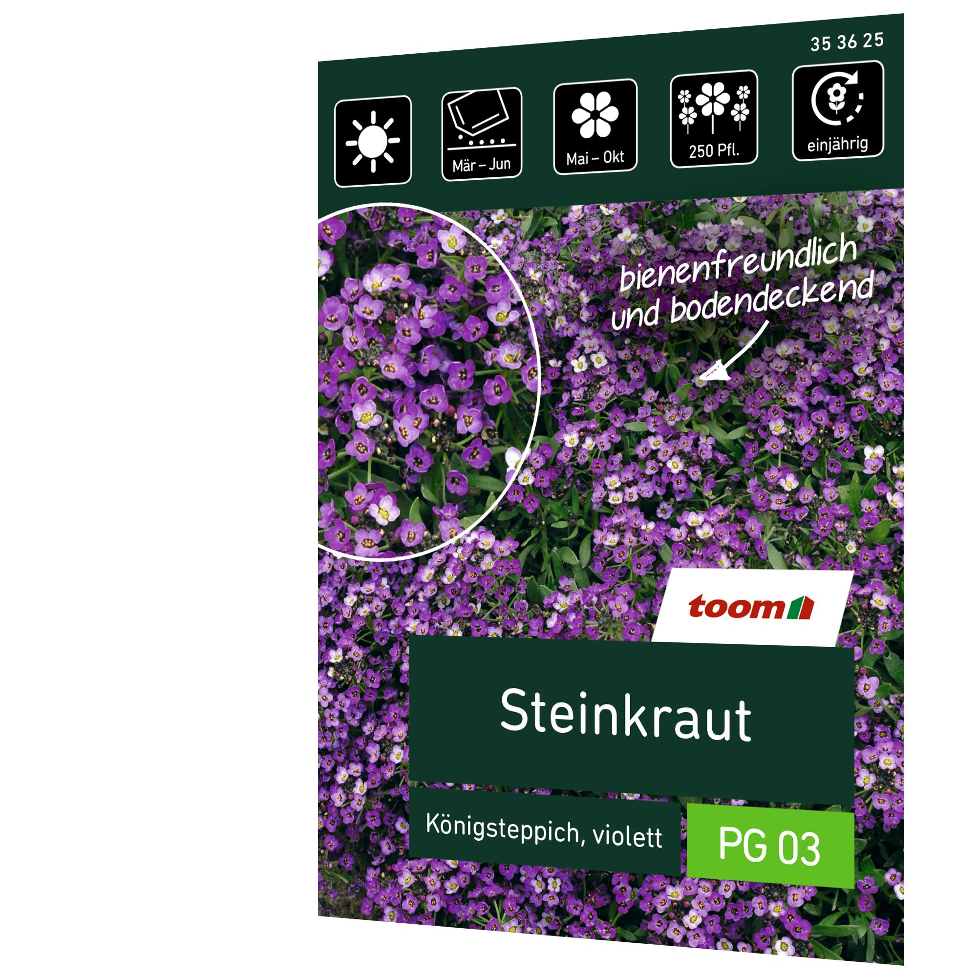 toom Steinkraut 'Königsteppich violett'