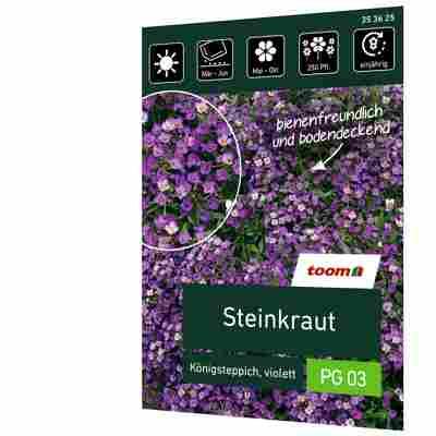 Steinkraut 'Königsteppich violett'
