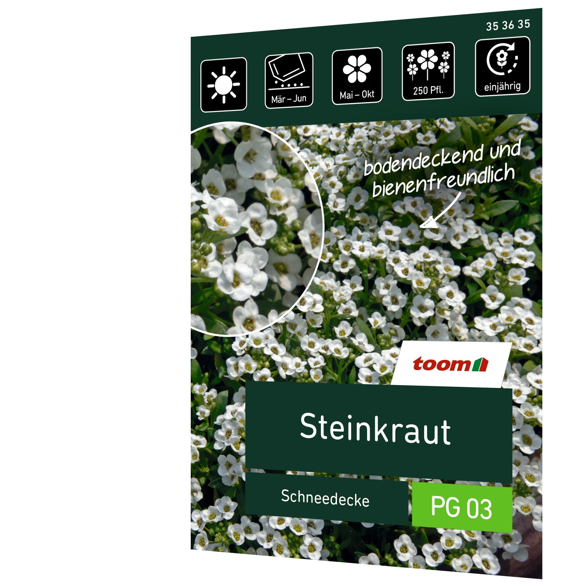 toom Steinkraut 'Schneedecke'