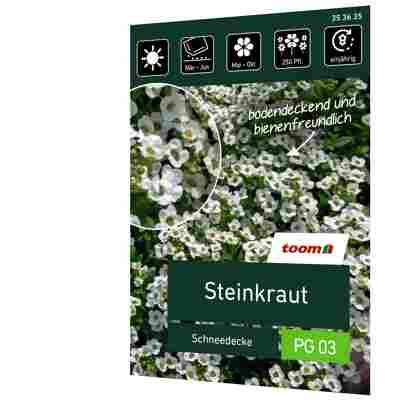 Steinkraut 'Schneedecke'