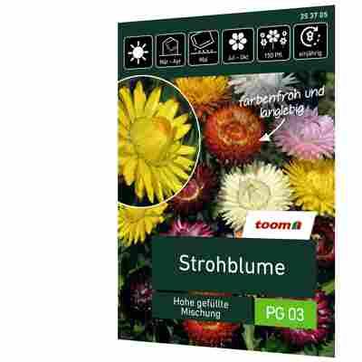 Strohblume 'Hohe gefüllte Mischung'