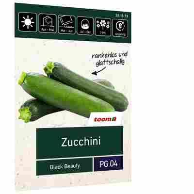 Zucchini 'Black Beauty'