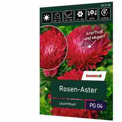 Rosen-Aster 'Leuchtfeuer'