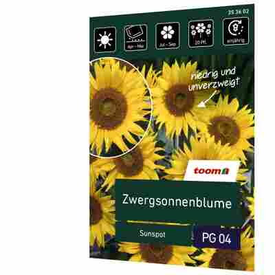 Zwergsonnenblume 'Sunspot'