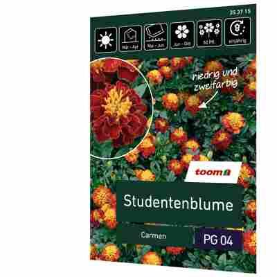 Studentenblume 'Carmen'