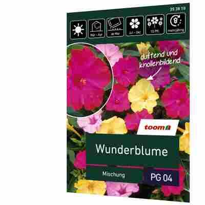 Wunderblume 'Mischung'
