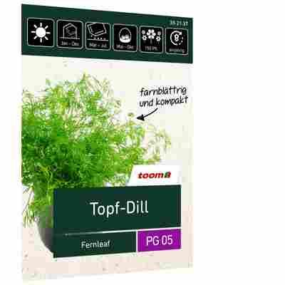 Topf-Dill 'Fernleaf'