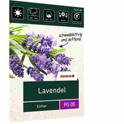 Lavendel 'Echter'
