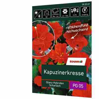 Kapuzinerkresse 'Glanz-Hybriden Scharlach'