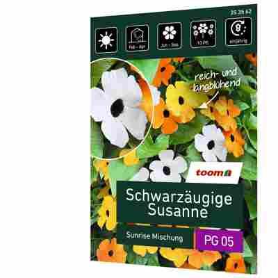 Schwarzäugige Susanne 'Sunrise Mischung'
