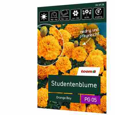 Studentenblume 'Orange Boy'