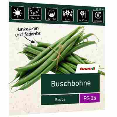 Buschbohne 'Scuba'