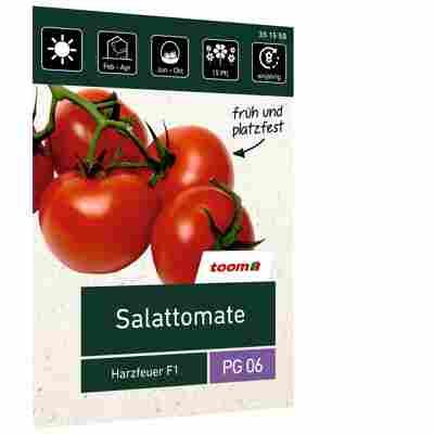 Salattomate 'Harzfeuer F1'