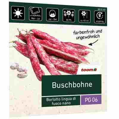 Buschbohne 'Borlotto lingua di fuoco nano'