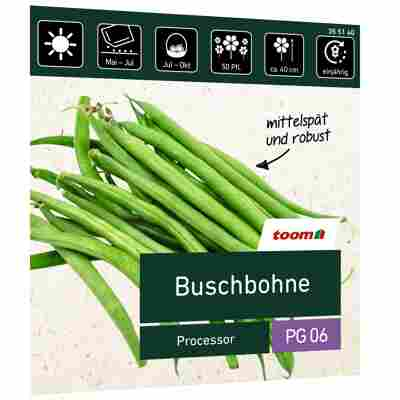 Buschbohne 'Processor'
