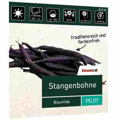 Stangenbohne 'Blauhilde'