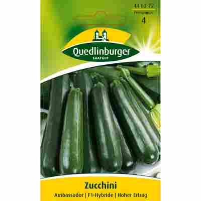 Zucchini 'Ambassador'